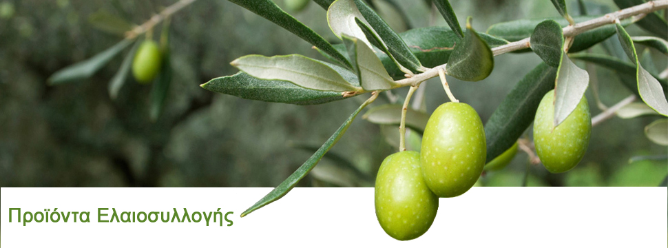 Original olive banner3